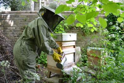 Beehives in churchyard